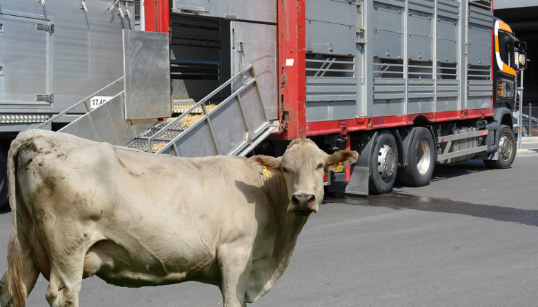 Diseño de una estructura de costos logísticos aplicados al transporte carretero pre - sacrificio de ganado bovino en México, con énfasis en bienestar animal