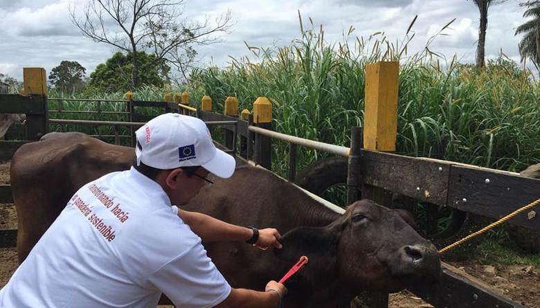 Autoridades nicaragüenses ponen en marcha el programa Bovinos