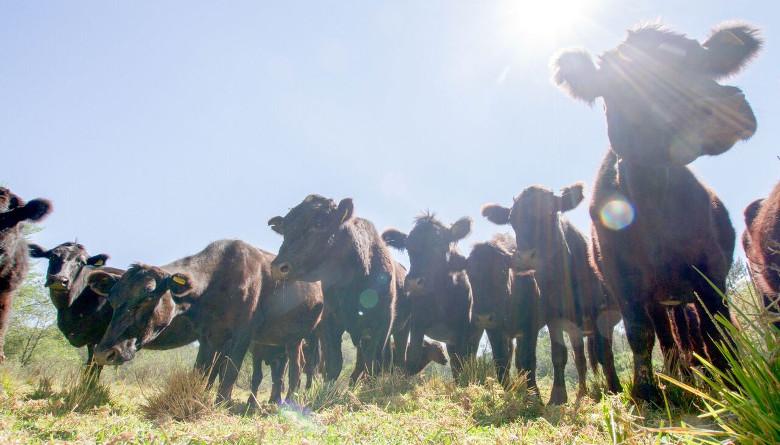 73% de las Unidades Económicas Rurales en el país son de tipo familiar