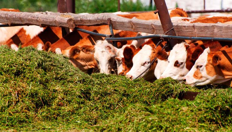 Rendimiento y calidad nutritiva del forraje y producción de carne con Cratylia argentea, en el trópico húmedo de Veracruz, México
