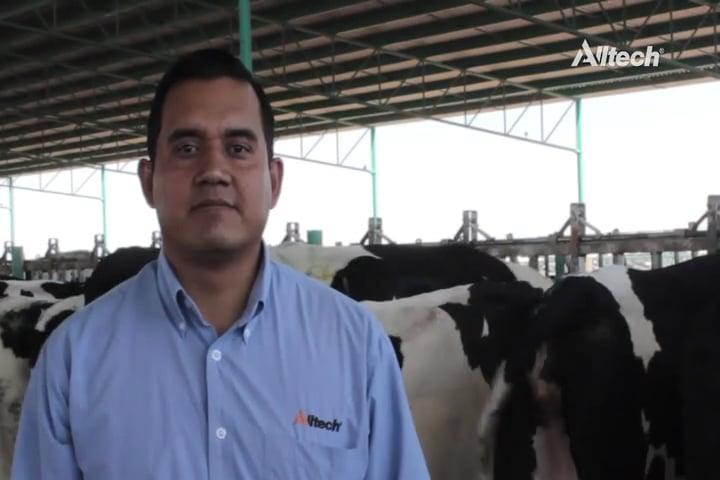 Condición corporal de las vacas