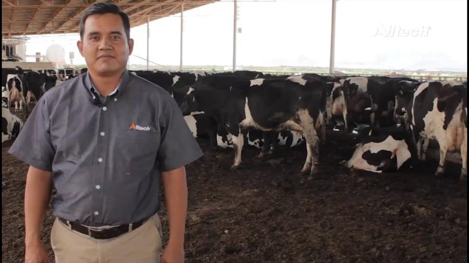 Cuidado de la pezuña y problemas de patas en vacas lecheras