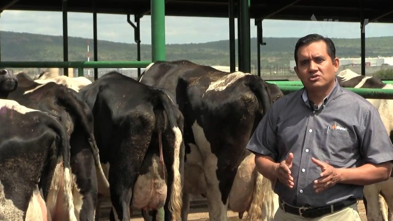 Placenta retenida en vacas lecheras