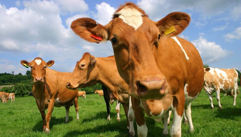 Estudio de asociación del genoma completo de características productivas y reproductivas en ganado bovino de doble propósito y lechería tropical especializada