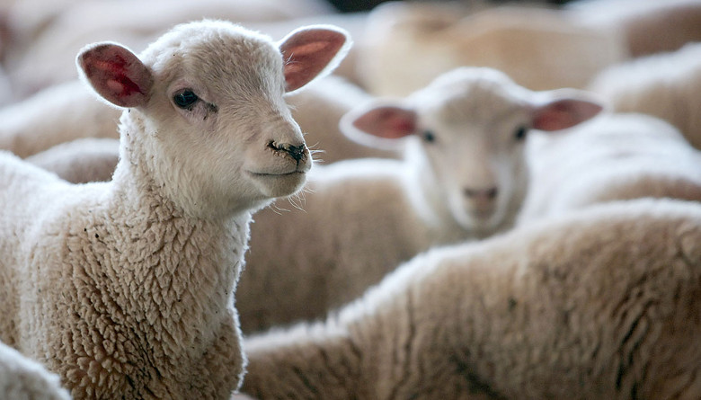 Evaluación de la carga parasitaria de ovinos en silvopastoreo y su correlación con el contenido de taninos en vegetación nativa consumida