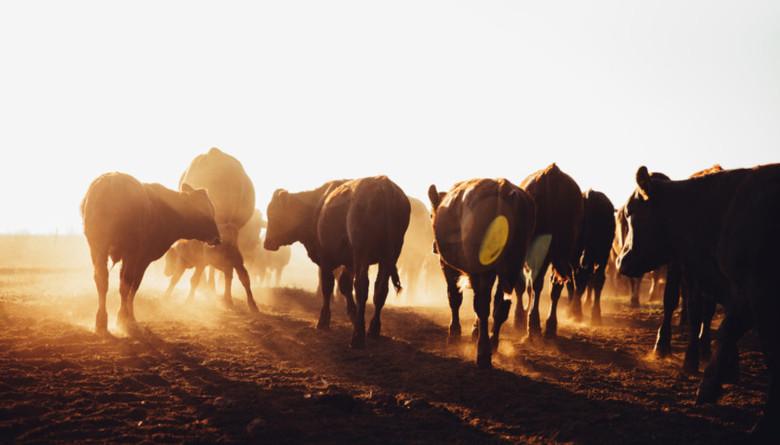 Quintana Roo destinará el 82% del presupuesto para la ganadería al abasto de agua