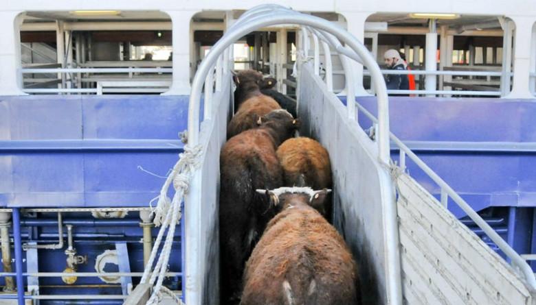 Ganaderos de Chiapas rechazan la importación de ganado centroamericano