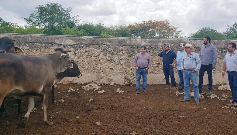 30% de los ganaderos en Tizimín quedaron fuera del programa crédito ganadero a la palabra