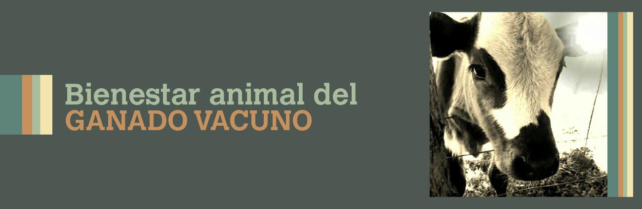 Bienestar Animal Del Ganado Vacuno
